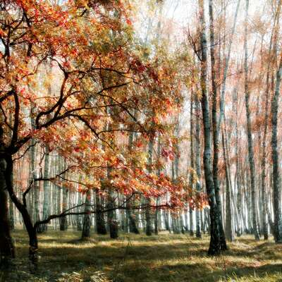 Wald Bilder The Wood Colours von Christiane Steinicke
