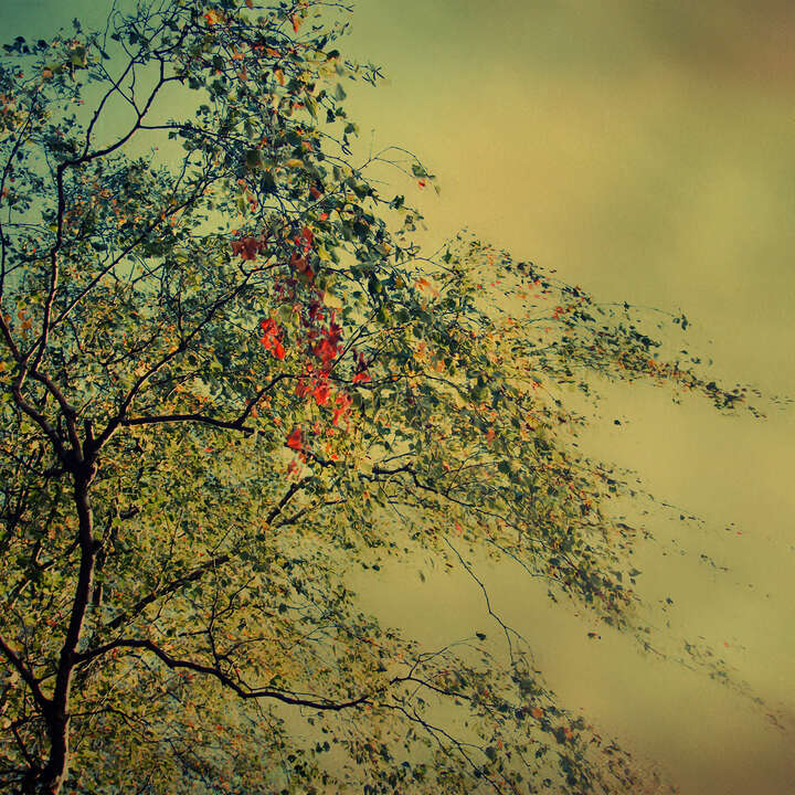 The Autumnal Whisper by Christiane Steinicke