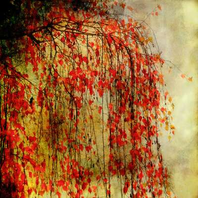 Tree on Fire by Christiane Steinicke