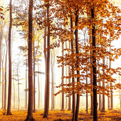 forest photographers: Christiane Steinicke: Golden Light by Christiane Steinicke
