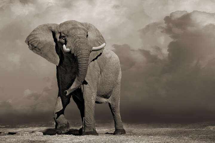 Elephant with Storm Clouds de Horst Klemm