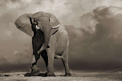 Elephant with Storm Clouds by Horst Klemm