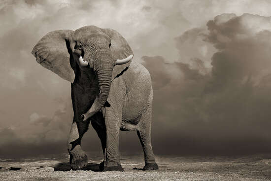 Elephant with Storm Clouds