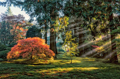 Landscape Wall Art: Autumn Light in The Maples by Roman Johnston