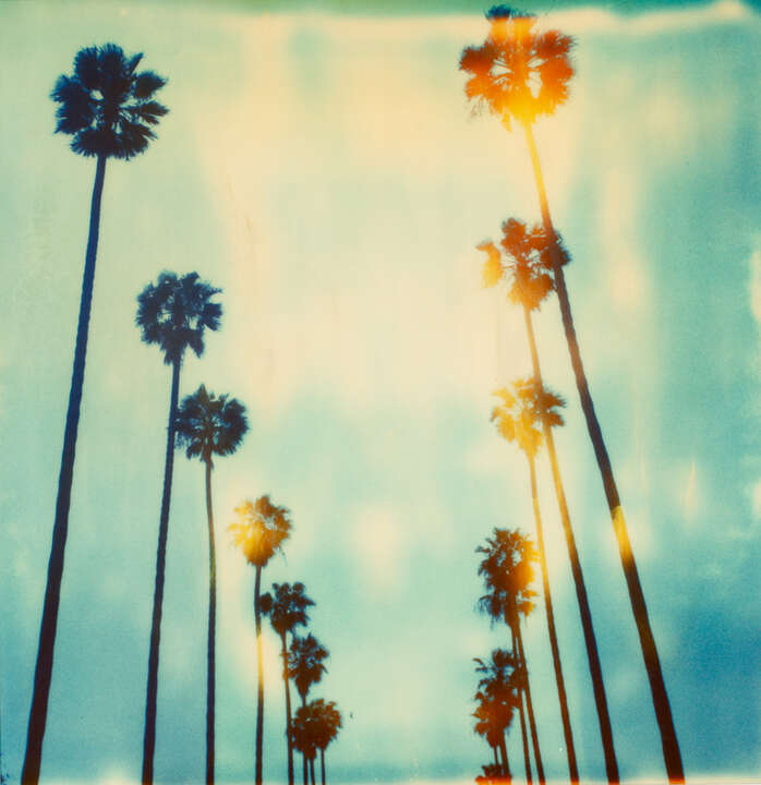 Palm Trees on Wilcox de Stefanie Schneider