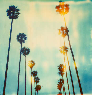 Beach wall art: Palm Trees on Wilcox by Stefanie Schneider
