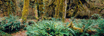 forest photography Rain Forest, Pacific Rim, Vancouver Island, British Columbia, Canada by Axel M. Mosler