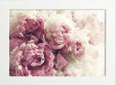 Pale Pink Peonies by Art Now Collection