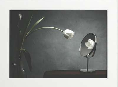 Mirrored Tulip by Art Now Collection