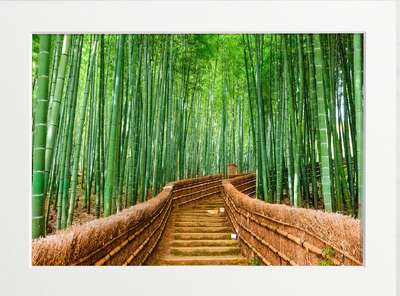 Japanese Bamboo Forest by Art Now Collection