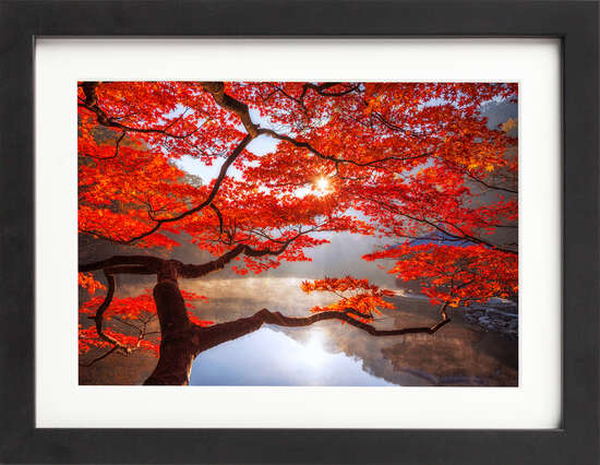 Red Maple Autumn by Art Now Collection