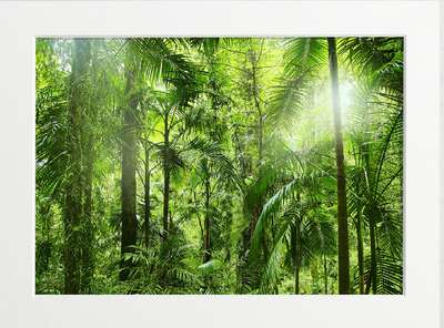 Green Rainforest by Art Now Collection
