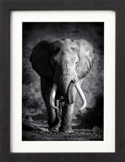 Bull Elephant by Art Now Collection