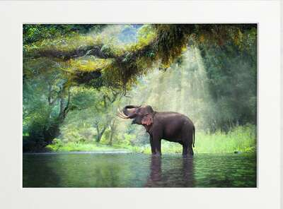 Thailand Forest Elephant by Art Now Collection