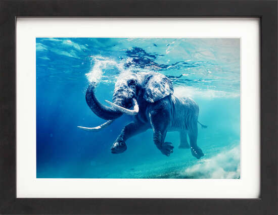 Underwater Elephant by Art Now Collection