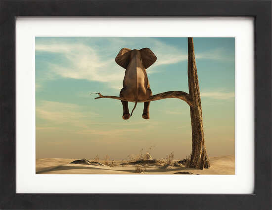 Elephant on a Branch by Art Now Collection