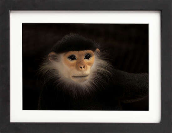 Old World Monkey by Art Now Collection
