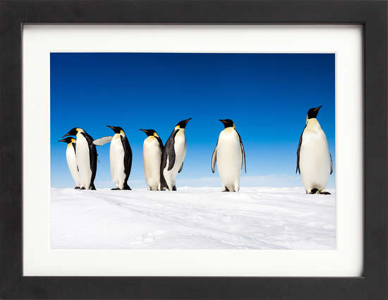 Emperor Penguins on Ice by Art Now Collection