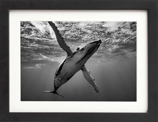 Humpback Whale by Art Now Collection