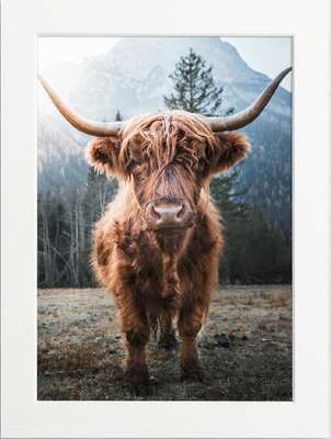 Horned Highland Cow by Art Now Collection