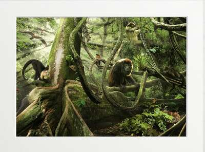 Rainforest Residents by Art Now Collection