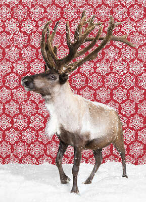 Gifts under 130 dollars: Reindeer by Catherine Ledner