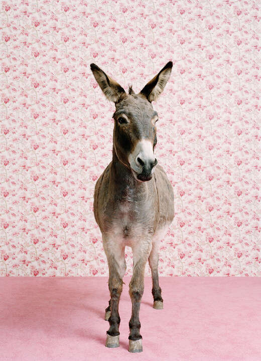 Donkey 2 by Catherine Ledner