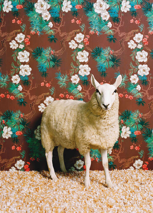 Sheep 1 by Catherine Ledner
