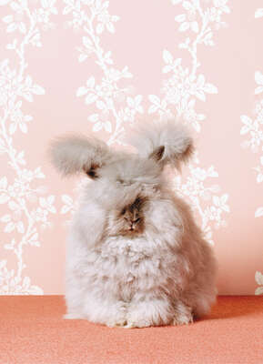 Fluffy Bunny by Catherine Ledner