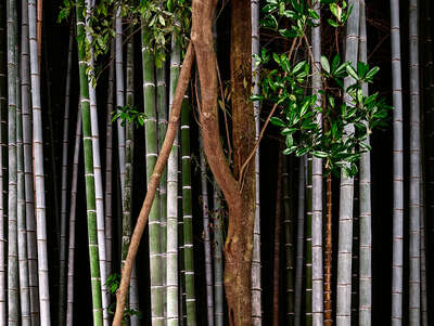 Bamboo I by André Wagner