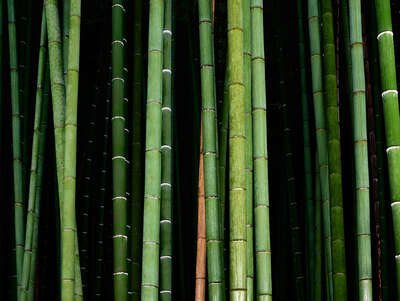Bedroom Wall Art: Bamboo II by André Wagner