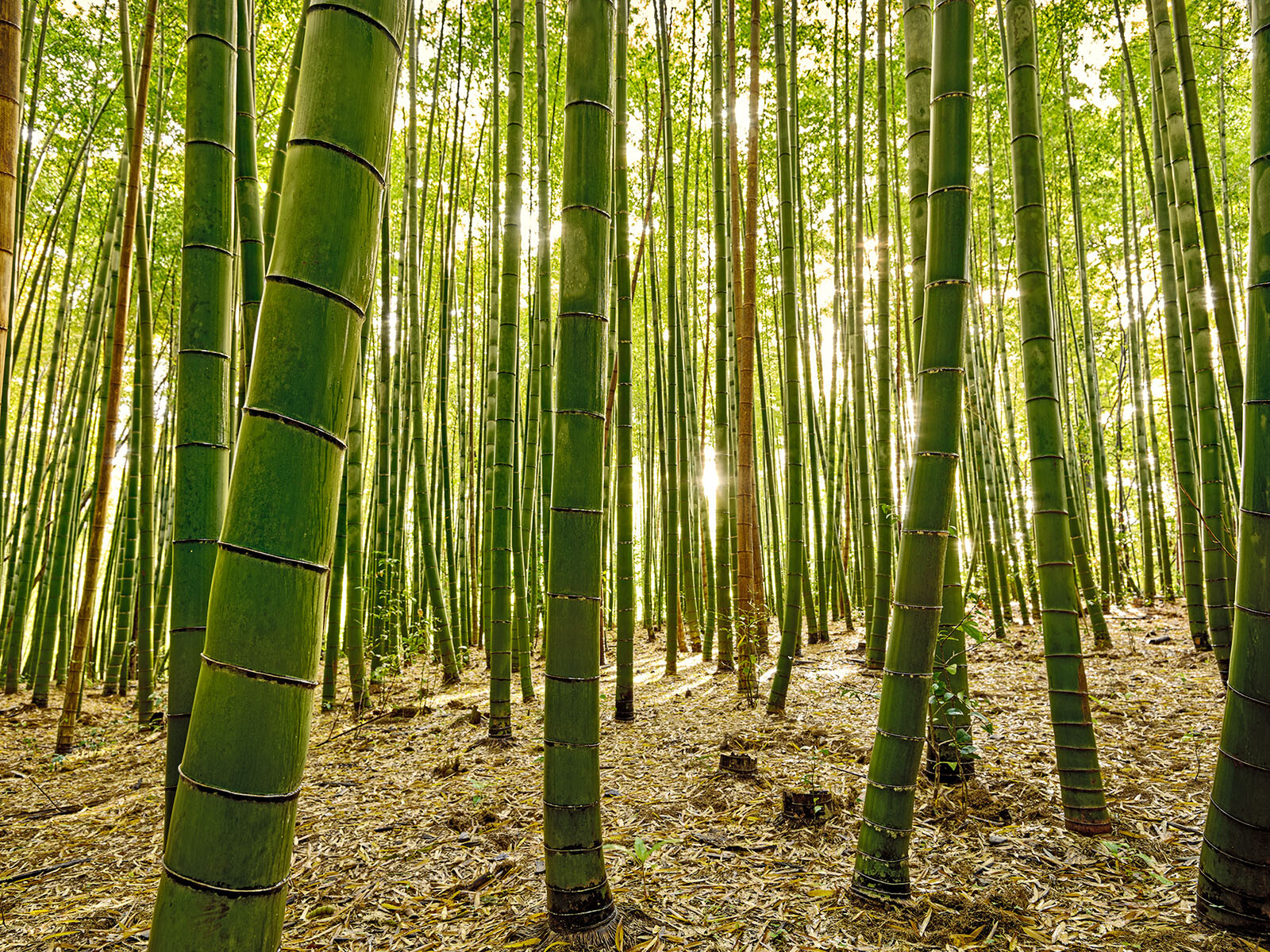 Bamboo IV von André Wagner