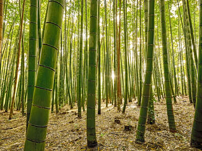 nature wall art and landscape prints  Bamboo IV by André Wagner
