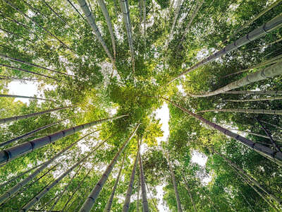 nature wall art: Bamboo V by André Wagner