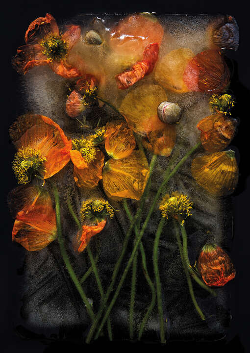 Poppies by Bruce Boyd