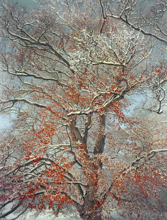 Early Snowfall by Barry Cawston