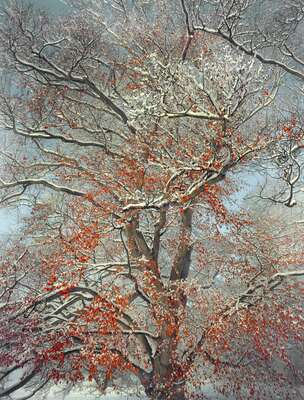 winter art: Early Snowfall by Barry Cawston