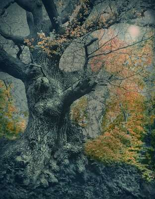 Wald Bilder Ancient Oak von Barry Cawston