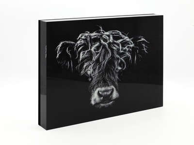 animal wall art:  Highlander II by Claudio Gotsch