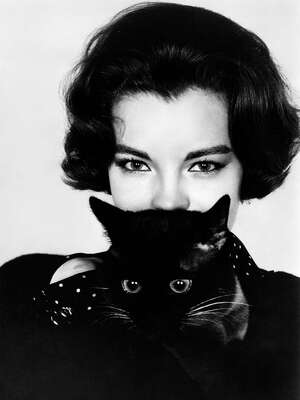 Celebrity Portrait Photography:  Romy Schneider with Cat by Classic Collection Ii