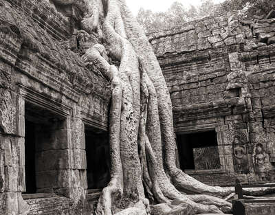 Ta Prohm Temple (Tomb Raider Temple) by Classic Collection Ill