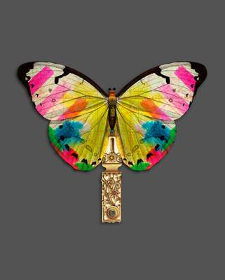 wall art wildlife prints animals  Papillon I by Christian Lacroix