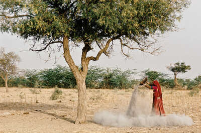 ashes under Khejeri tree, Rajasthan by Christopher Pillitz