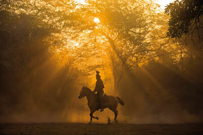 horse training in New Delhi by Christopher Pillitz