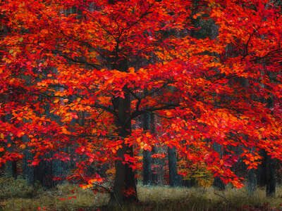 Wald Bilder Indian Summer von Christiane Steinicke