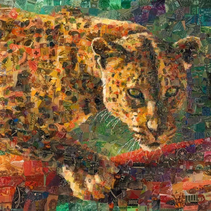 Leopard by Charis Tsevis