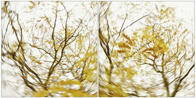 pieces of autumn III by Carolin Wolf