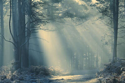 Wald Bilder Forest Light von David Baker