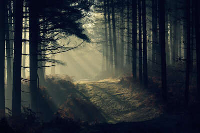Wald Bilder New Forest Dawn von David Baker
