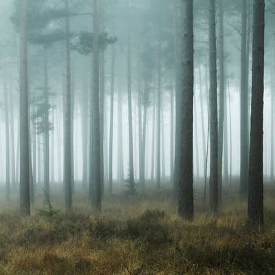 landscape artworks for guest room: New Forest Mist by David Baker